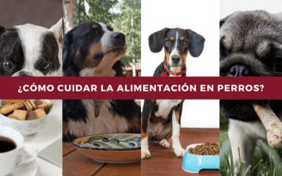 ¿Cómo cuidar la alimentación en perros?