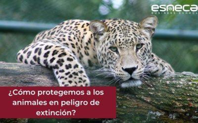 Medidas para proteger a los animales en peligro de extinción