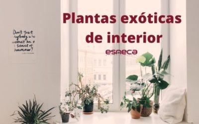 5 plantas exóticas de interior para decorar tu casa