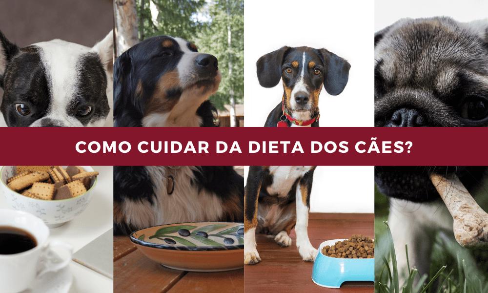 Cuidar a alimentação em cães, como se faz?