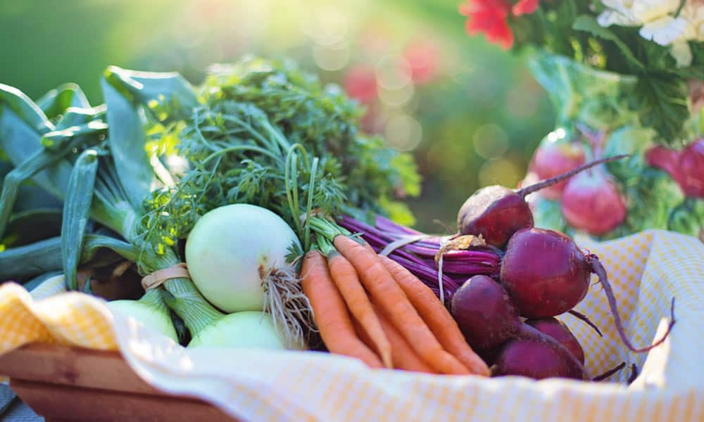 ¿Qué son los alimentos orgánicos?