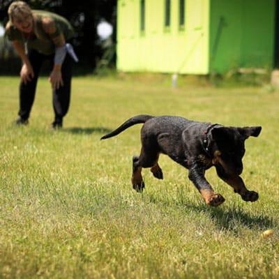 Estudiar maestría en adiestramiento y conducta canina