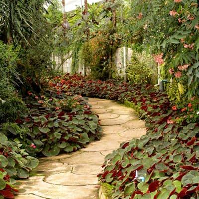 Estudiar maestría en jardinería