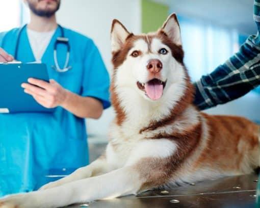 Estudiar maestría en nutrición animal (animales de compañía)