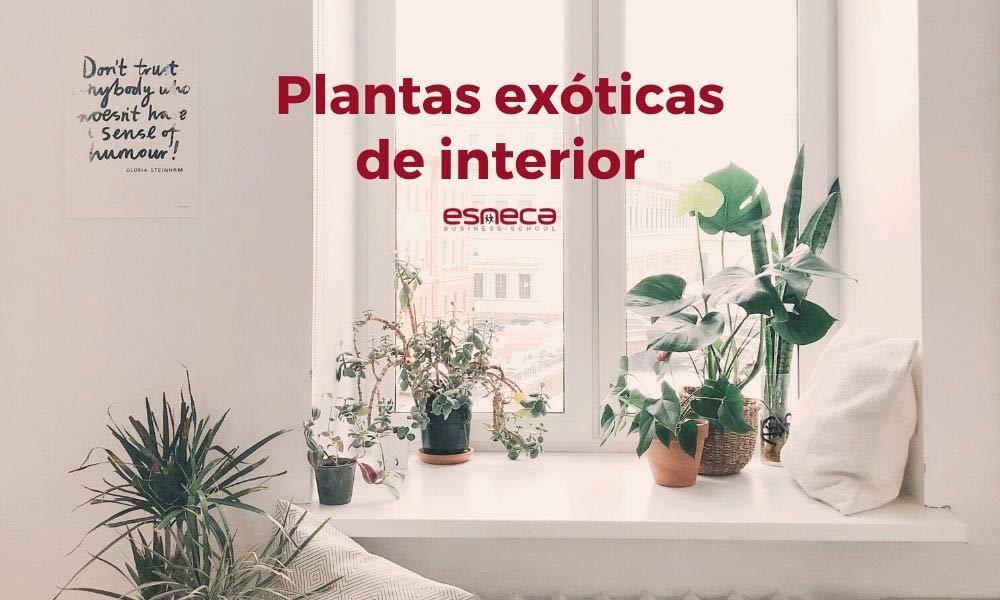 5 plantas exóticas de interior para decorar a sua casa
